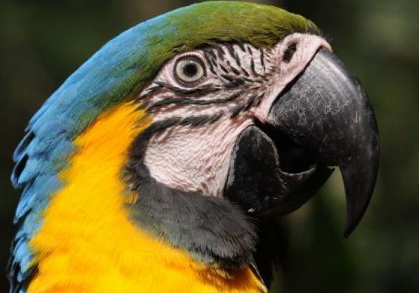 vogelpark-iguazu---zig-koch.jpg