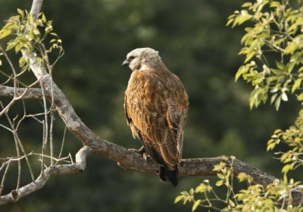 vögel-im-pantanal