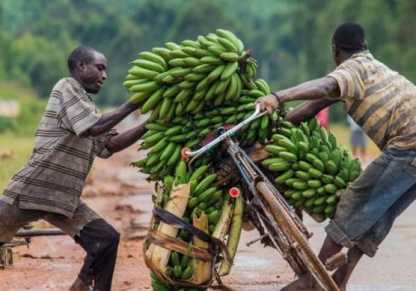 bananen-auf-dem-fahrrad