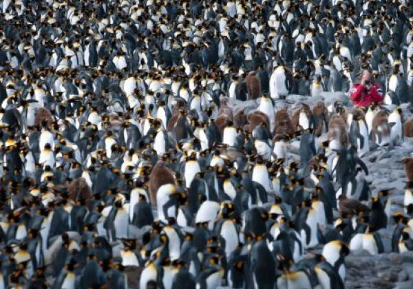 photograph-in-einer-pinguinkolonie