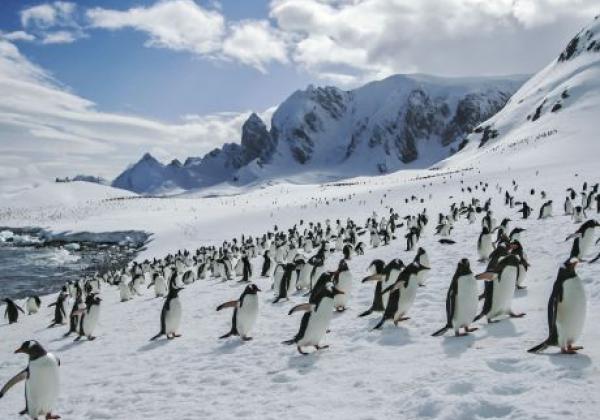 pinguine-kommen-an-land