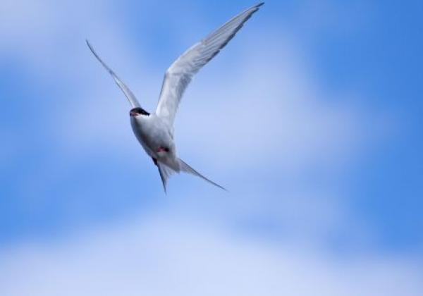 einzelner-vogel