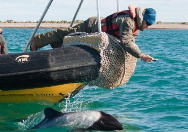 delfin-vor-schiff