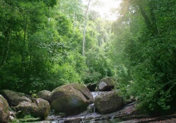 singharaja-rain-forest-2