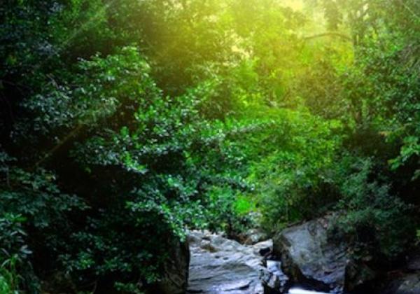 singharaja-rain-forest