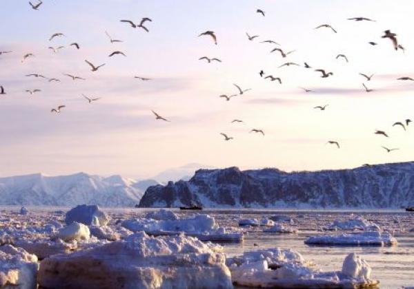 eisschollen-und-vögel-in-kamtschatka