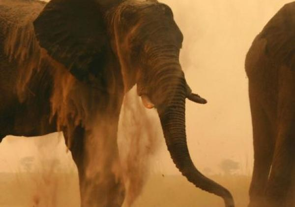 elefanten-im-staub