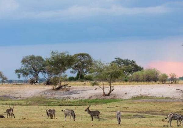 verschiedene-tiere-in-botswana
