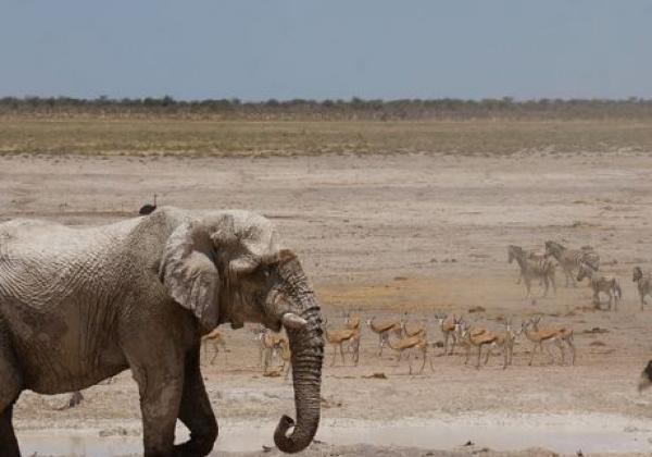 elefant-im-etosha-nationalpark