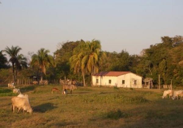 jaguar-eco-lodge-nord-pantanal-20090816-168-me