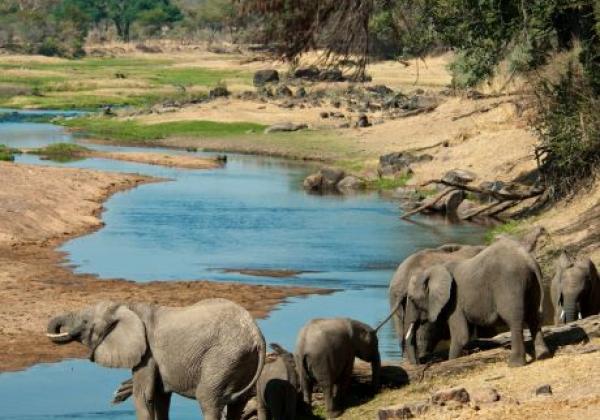 elefanten-in-ruaha