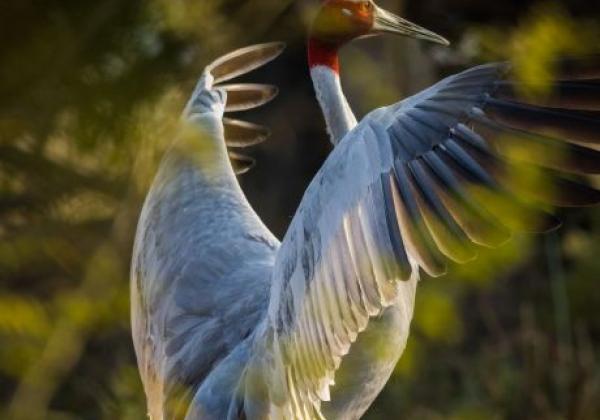 vogel-in-bharatpur
