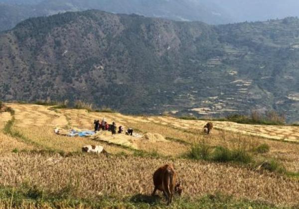bhutan-felder