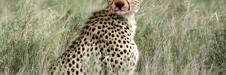 serengeti-national-park-048