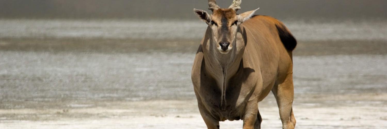 ngorongoro-conservation-area-021