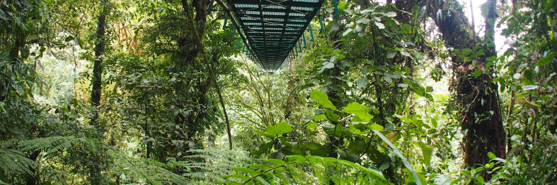 monteverde-hängebrücken.jpg
