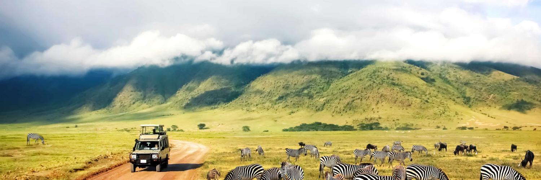 zebras-auf-safari