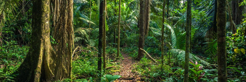 manu-nationalpark