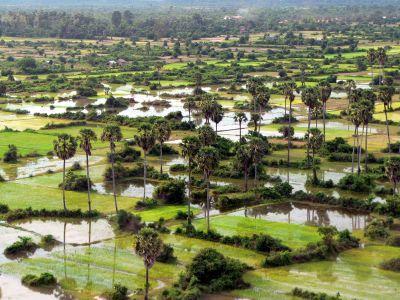 cmb-rice-paddies
