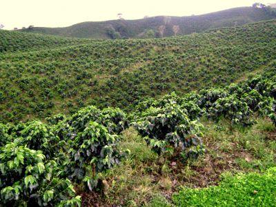 Die Kaffeekulturlandschaft um Chinchiná
