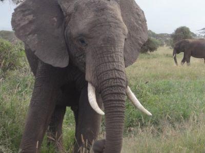 elefant-aus-der-nähe