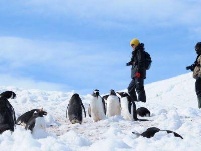 reisende-mit-pinguingruppe.jpg