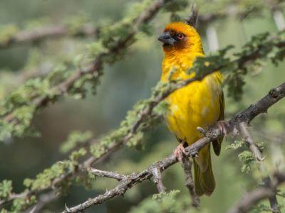 Äthiopien-vogelbeobachtung