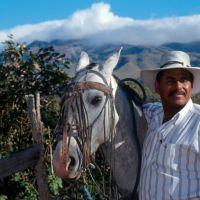 rincon-horse