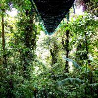 hängebrücken-monteverde-costa-rica