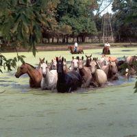 campo-pferde