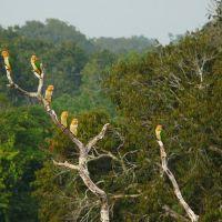 rainforest.nature