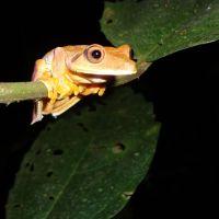 frosch-im-amazonasgebiet