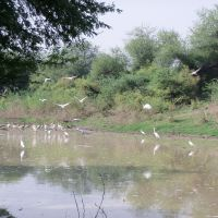 bird-sanctuary-1.jpg