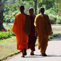 budhist-monks-in-sri-lanka