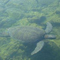 galapagos-water-turtle.jpg