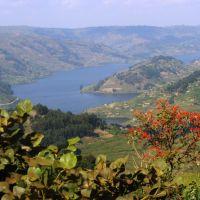 uganda---lake-bunyonyi---flower.jpg