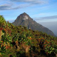 rwanda---volcanoes-np-1