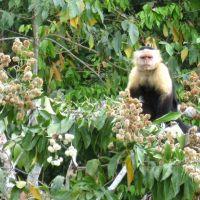 gatun-see-mit-monkey-island