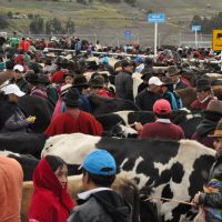 guamote-market-17.jpg