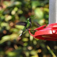 mindo-colibri.jpg