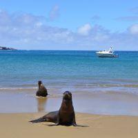 galapagos-sea-lion-7.jpg