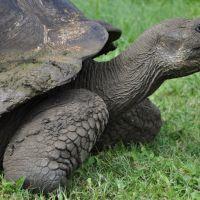 galapagos-turtle-3.jpg