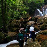 sinharaja-forest-reserve-in-sri-lanka