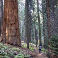 day-2-2-sequoia-hikes