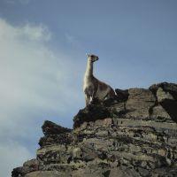 mw-patagonien-fte-cha-torres-tag-(10)