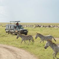 zebras-vor-jeep