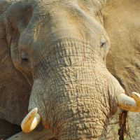 elephant-up-close.jpg