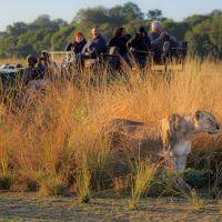 Wildlife South Luangwa