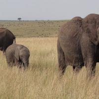 3-elefanten