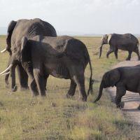 elefanten-am-straßenrand
